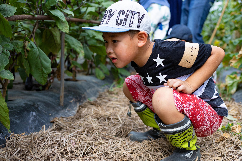 野菜を眺める男の子