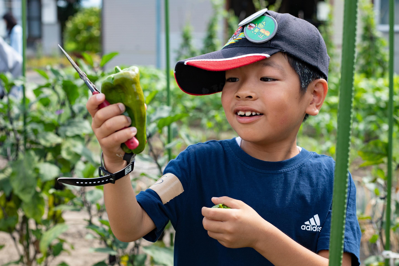 ピーマンを収穫する男の子